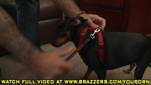 Alexis Breeze - Dog Magnet