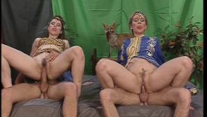 Belly dancers get their fill (CLIP)