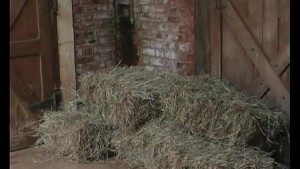 Gay Day In The Hay - Julia Reaves